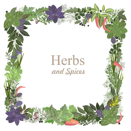 variety: collection of herbs and spices for you design