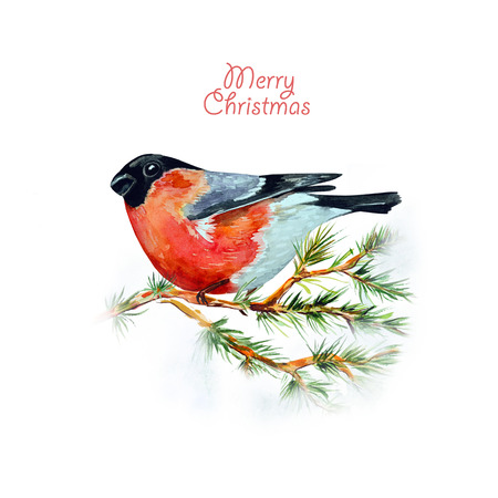 black beak: watercolor card with a bird