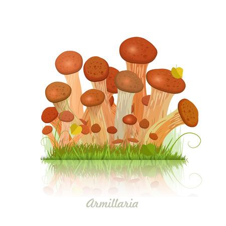 Edible mushroom armillaria for you design Vector