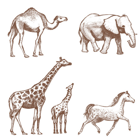 running camel: collection of picture pencil with animals
