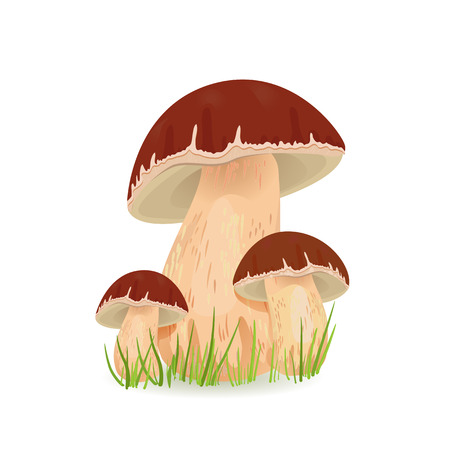 edible: Edible mushroom porcini for you design
