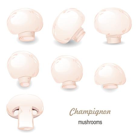 champignon: mushroom champignon Illustration