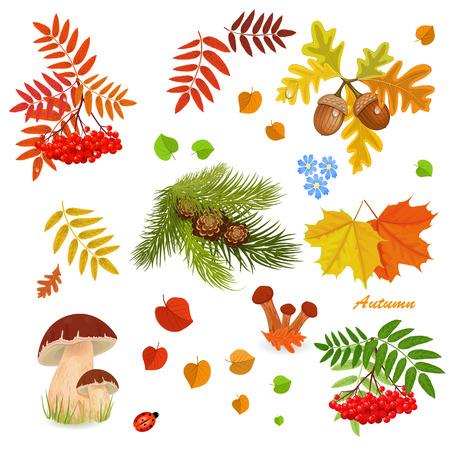 pinoli: Collezione autunno per il vostro disegno