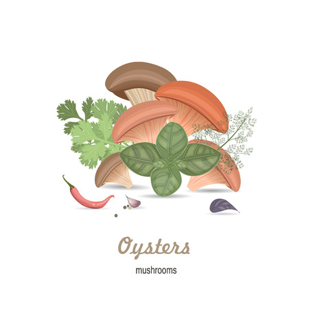 allspice: mushrooms oysters with herbs for your design Illustration