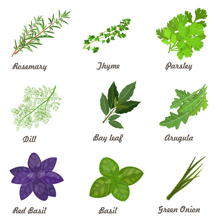 chives: collection of herbs