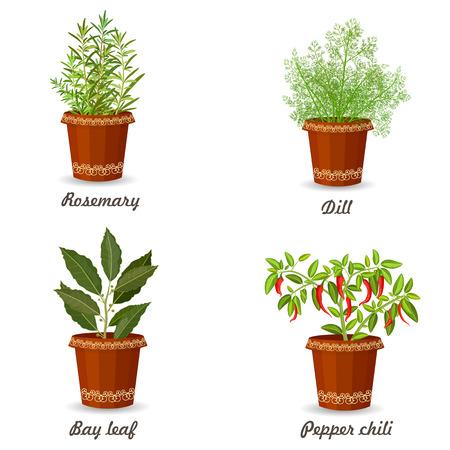 flowerpots: collection of herbs in a flowerpots