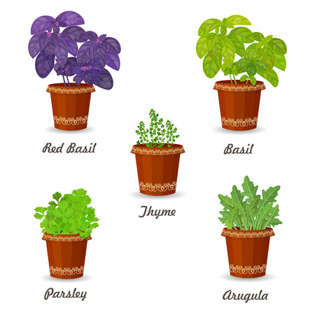 collection of herbs in a flowerpots Vector