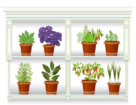 pantry: shelfs with collection of herbs in a flowerpots at home