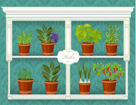 flowerpots: shelfs with collection of herbs in a flowerpots at market