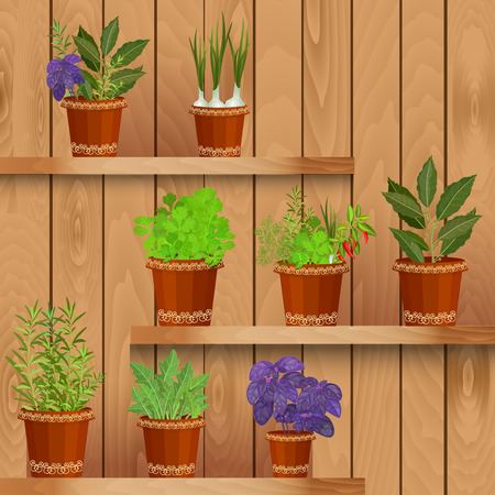 flowerpots: shelfs with collection of herbs in a flowerpots at home