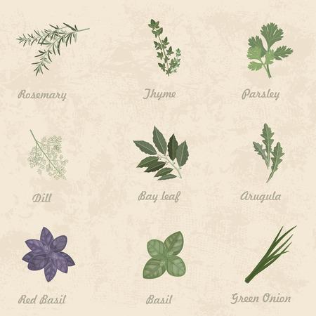 cebollin: colección de hierbas