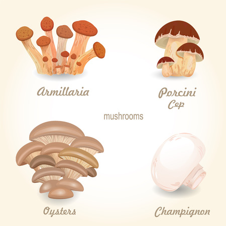 agaricus: Collection of isolated edible mushrooms for your design