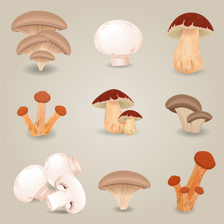 edible: Collection of isolated edible mushrooms for your design