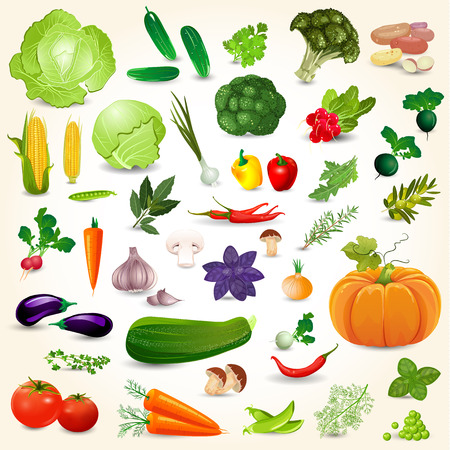 fresh vegetable: Collection of isolated ripe vegetables herbs and spices mushrooms for your design