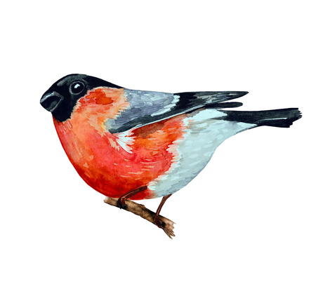 bullfinch: watercolor painting bullfinch on branch. vector illustration