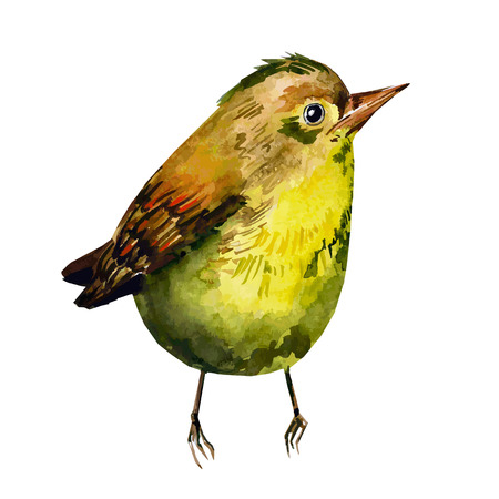 Cute birds for your design. watercolor