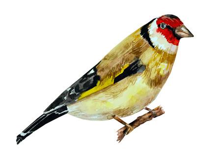 watercolor painting bird on branch. vector illustration Vector Illustration