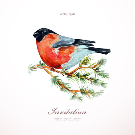 christmas watercolor: watercolor painting bullfinch on branch pine illustration