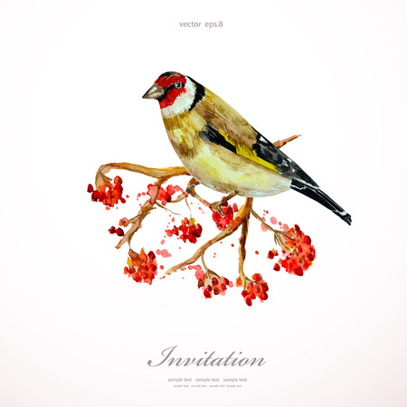 ash: watercolor painting wild bird on branch rowan.  illustration. template for your design