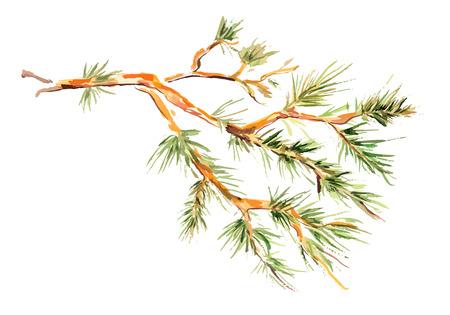Aquarellmalerei - Tannenzweig. Vektor-Illustration Standard-Bild - 33665899