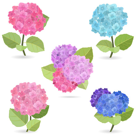 bouquet: Collection of flowers, hydrangea