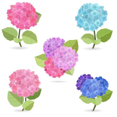Sammlung von Blumen, Hortensien Standard-Bild - 36008404