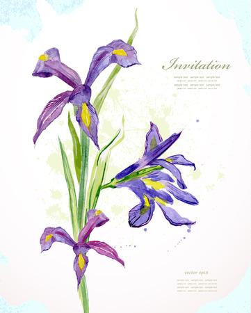 isolated irises: Invitation card with watercolor beautiful flowers. iris. vector illustration Illustration