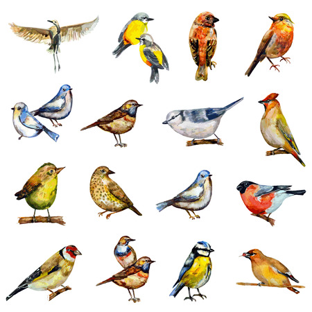 robin bird: collection of birds. watercolor painting