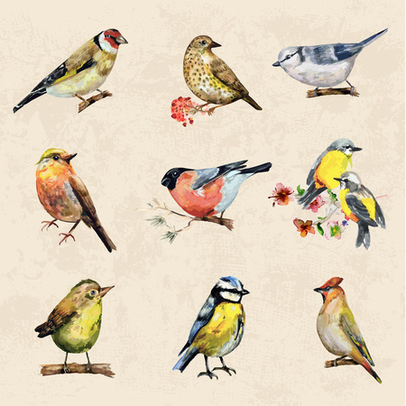 small: vintage a collection of birds. watercolor painting