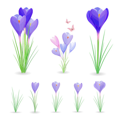 Sammlung von Krokusse mit Schmetterlingen für Ihr Design