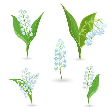 valley: cute collection of Lilies Of The Valley for your design Illustration