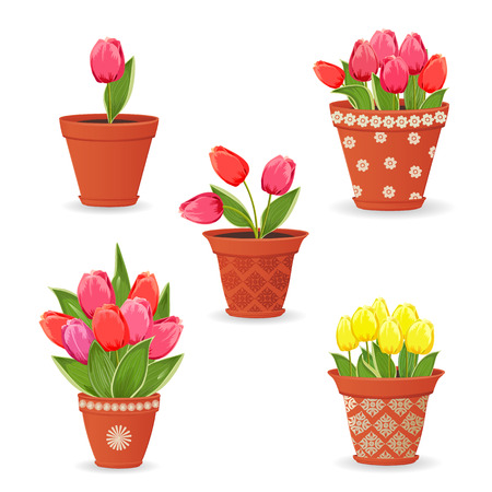 tulips in green grass: collection of tulip planted in ceramic pots for your design