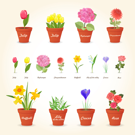houseplants: realistic collection of different houseplants in ceramic pots and lovely flowers for your design Illustration