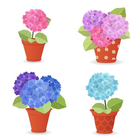 flor caricatura: colección de hortensia plantado en macetas de cerámica para su diseño Vectores