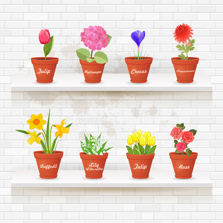 vintage collection of planted different lovely flowers in ceramic pots on shelfs for your design