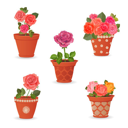 planted: collection of rose planted in ceramic pots for your design Illustration