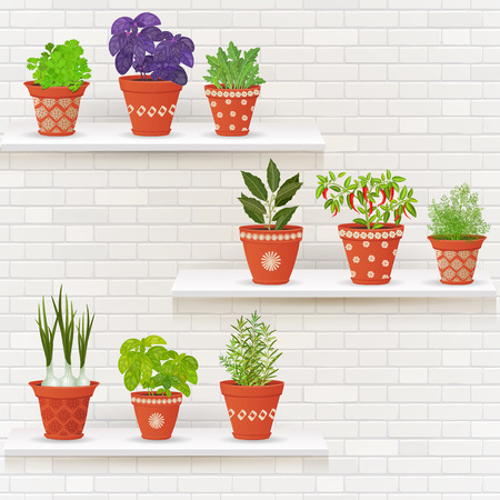 planted: vintage collection of planted different herbs in ceramic pots on shelfs for your design