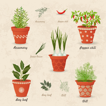 planted: vintage collection of different herbs planted in ceramic pots and fresh herb leaves and spices for your design Illustration