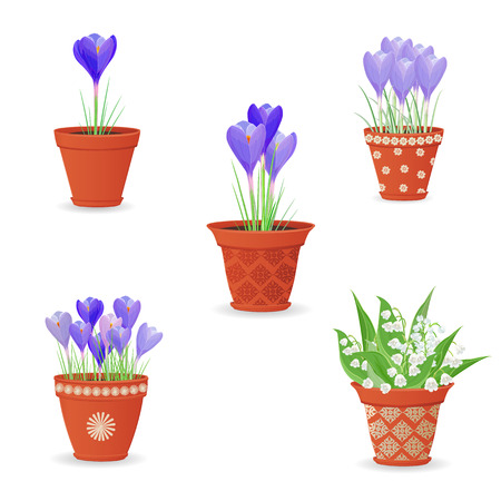 crocus: collection of lily of the valley and crocus planted in ceramic pots for your design Illustration