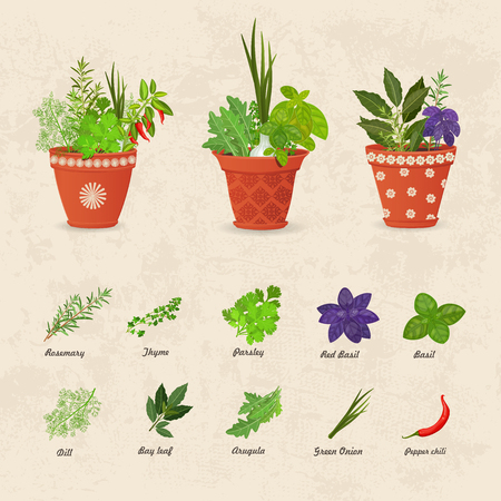 aromatic: rustic collection of different herbs planted in ceramic pots and fresh herb leaves and spices for your design