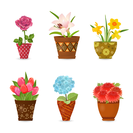 collection of colorful flowers planted in art floral pots for your design