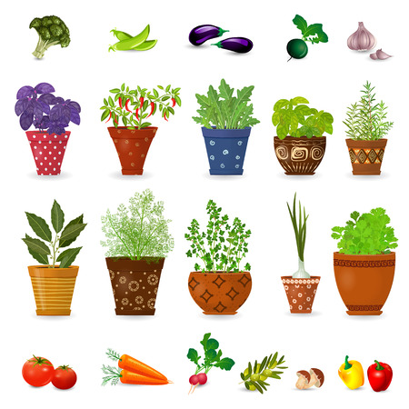 collection of different herbs in art floral pots and set of vegetables for your design