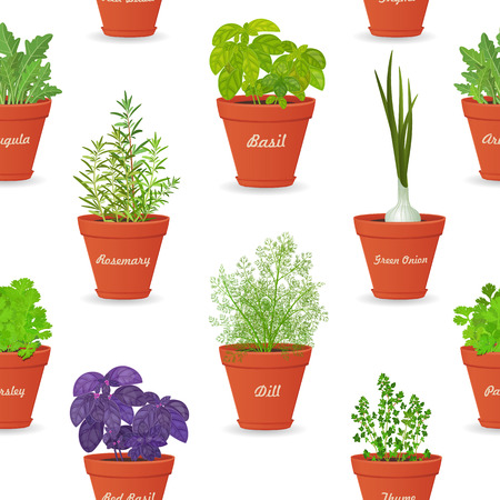 basil: seamless texture with herbs planted in pots for your design