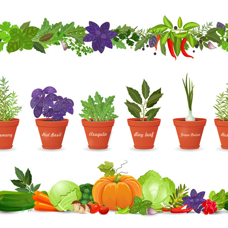 isolated seamless borders with vegetables and herbs on white background Illustration