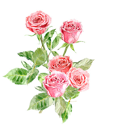 pink rose: greeting card with bouquet of roses. watercolor painting.