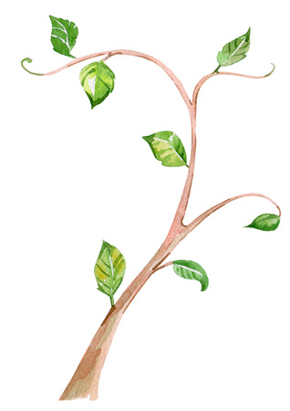 stylised twig of tree with green leaves. watercolor painting