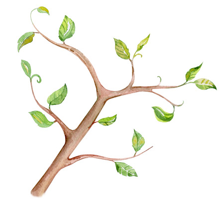stylised tree branch on white background for your design. watercolor painting