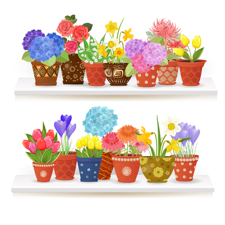 planted: colorful collection of fine flowers planted in ceramic pots on white shelves for your design. Illustration