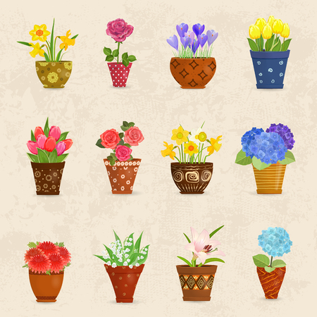 planted: cozy collection of flowers planted in ceramic pots for your design