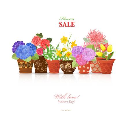 Colorida colección de flores finas plantadas en macetas de cerámica para su diseño.